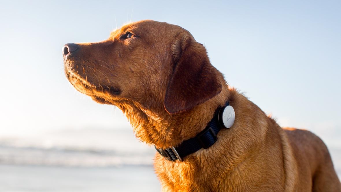 tracker gps salute animali domestici