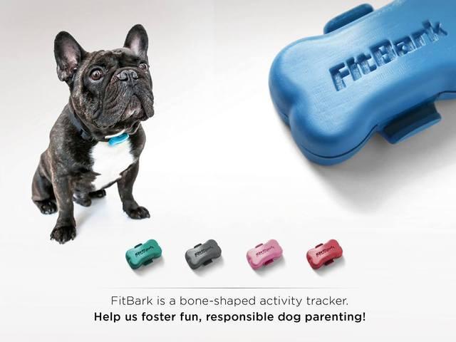 fitness tracker per cani