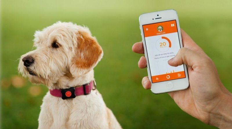 I migliori indossabili GPS e monitoraggio salute per cani e gatti