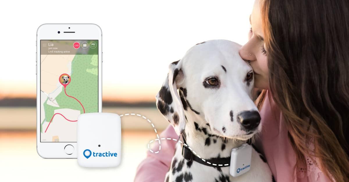 gps e monitoraggio cane